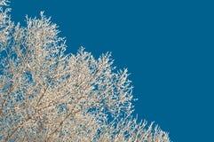 Frost sur des arbres Photos stock