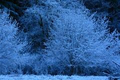 Frost sur des arbres en vallée de Snohomish Photos libres de droits