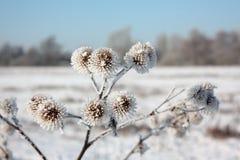 Frost sur des usines Photographie stock libre de droits