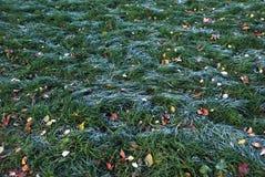 Frost sur l'herbe verte avec le gel de matin Photographie stock libre de droits