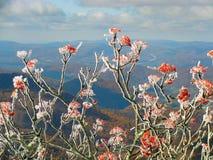 Frost sur les baies rouges Images libres de droits