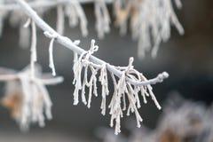 Frost sur les branchements Image libre de droits