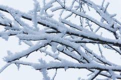 Frost sur les branches d'arbre nues images libres de droits