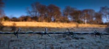 Frost sur une barrière de barbelé Photos libres de droits