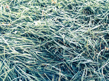 Frost sur une clairière de forêt images libres de droits