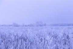 Frost sur une herbe Paysage naturel provincial russe par temps sombre toned photo stock