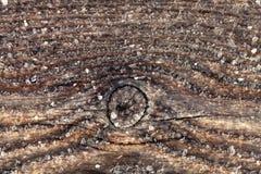 Frost sur une vieille surface en bois Rosée et congélation de matin d'hiver image stock