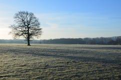 Frost täckt landskap i England Fotografering för Bildbyråer