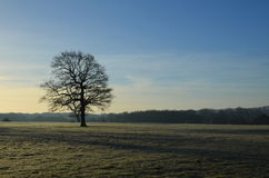 Frost täckt landskap i England Royaltyfri Bild