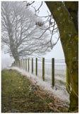 Frost täckte gräs och träd Arkivfoton