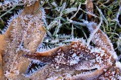 Frost täckte vintersidor i gräs Arkivfoto