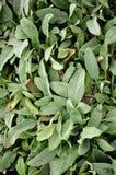 Frost-Tau auf Blättern lizenzfreie stockfotos
