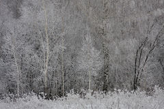 Frost texture in forest in winter Stock Photos