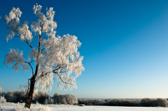 Frost tree Royalty Free Stock Photos
