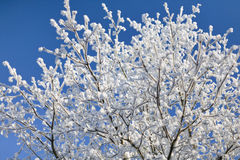 Frost tree Stock Image