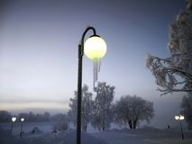 Frost on a tree. In Arjeplog, Christmas time royalty free stock image