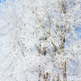 Frost on a Tree branches Royalty Free Stock Image
