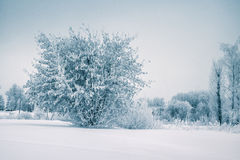 Frost tree in winter forest on morning with fresh snow Royalty Free Stock Photos