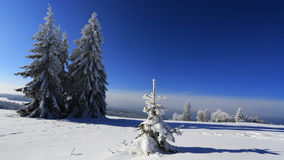 Frost on trees - Bohemian Forest. Sumava. Czech Royalty Free Stock Photography