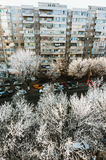 Frost in trees, Bucharest, Romania Stock Images
