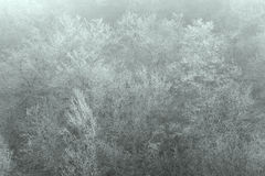 Frost in the trees, El Cabrio, Burgos Stock Photos