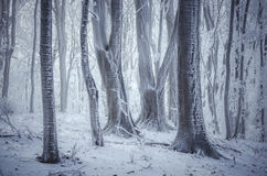 Frost on trees in fantasy forest with fog in winter Royalty Free Stock Photo