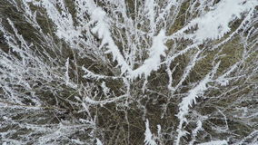 Frost on trees. Moves camera on tree covered with frost stock footage