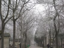 Frost on the trees in the Père Lachaise Cemetery, Paris royalty free stock photography