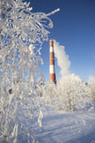 Frost on the trees and a pipe boiler with departing smoke. Royalty Free Stock Image