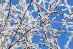Frost on the trees on a sunny day Stock Photography