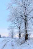 Frost trees in winter Royalty Free Stock Photography