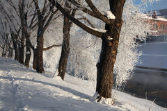Frost on the trees in Yekaterinburg, Russia. Royalty Free Stock Photography