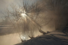 Frost on the trees in Yekaterinburg, Russia. Royalty Free Stock Photo