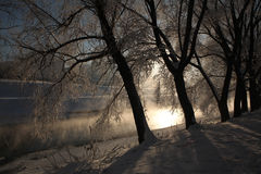 Frost on the trees in Yekaterinburg, Russia. Stock Photo