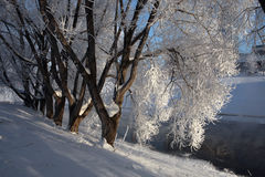 Frost on the trees in Yekaterinburg, Russia. Stock Image