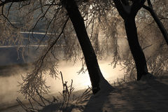 Frost on the trees in Yekaterinburg, Russia. Royalty Free Stock Image