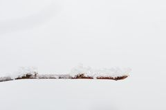 Frost twig Royalty Free Stock Images