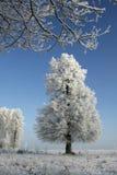 Frost und Eiche Stockfotos