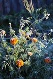 Frost und Garten lizenzfreies stockfoto
