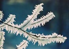 Frost und Niederlassung Stockbilder