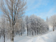 Frost- und Sonnentag ist wunderbar Stockbild