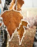 Frost-Urlaub Stockfoto