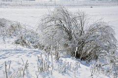 Frost vegetation Stock Photography