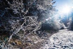 Frost-Wald in der Hintergrundbeleuchtung Lizenzfreies Stockbild