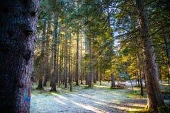 Frost-Wald in der Hintergrundbeleuchtung Stockbilder