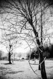 Frost-Wald in der Hintergrundbeleuchtung Stockfotografie