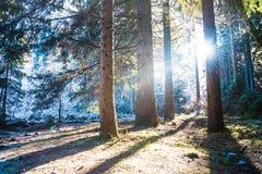 Frost-Wald in der Hintergrundbeleuchtung Stockbild