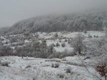 Frost-Wald in Rumänien Stockfoto