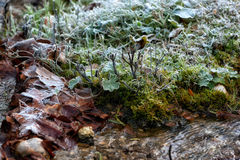 Frost the water's edge in a winter landscape Royalty Free Stock Photos