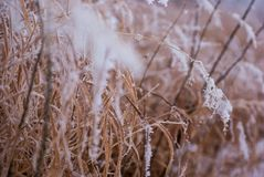 Literal Frosted Wheat in Winter Royalty Free Stock Images